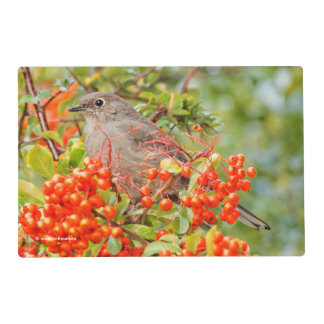 Townsend's Solitaire on the Pyracantha Placemat