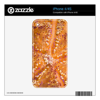Toxic Fire Urchin (Asthenosoma varium) Decal For The iPhone 4S