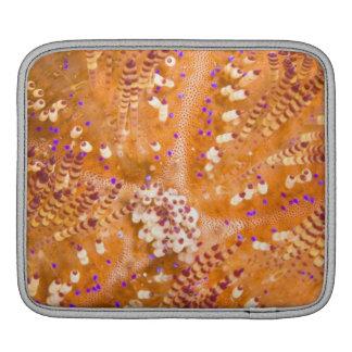 Toxic Fire Urchin (Asthenosoma varium) iPad Sleeve