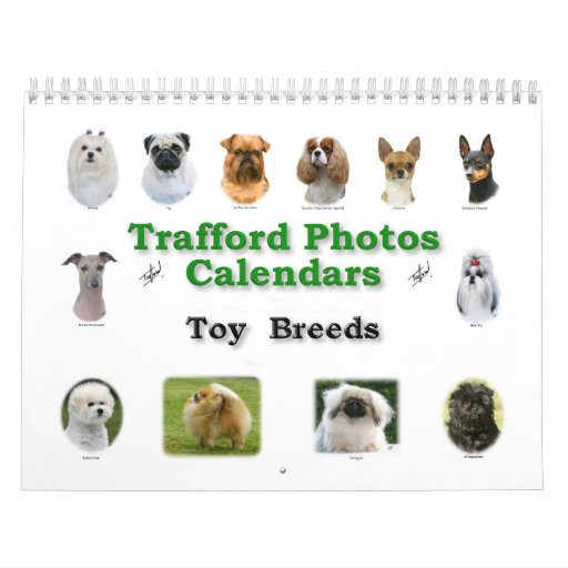 Toy Breeds Calendar
