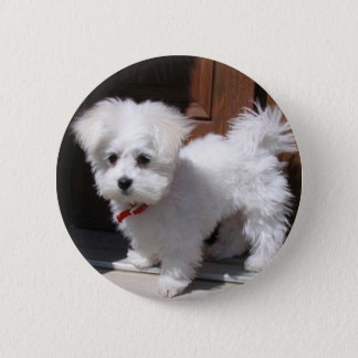 Toy Dogs Button