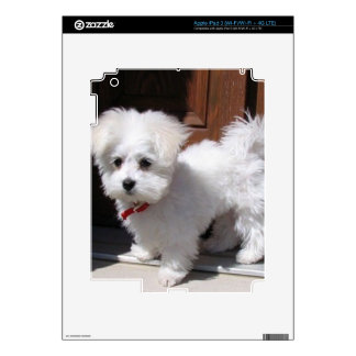 Toy Dogs iPad 3 Decal