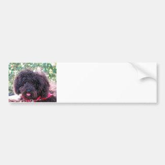 Toy Poodle Black Bumper Sticker