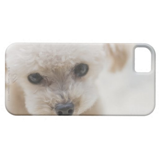 toy poodle blackberry bold covers