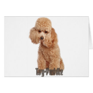 toy poodle breeds card