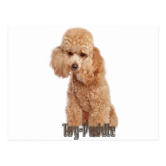 toy poodle breeds postcard