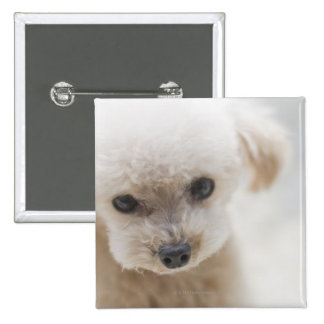 toy poodle button