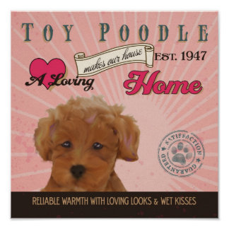 Toy Poodle Dog Art Poster- Makes Our House Home Poster