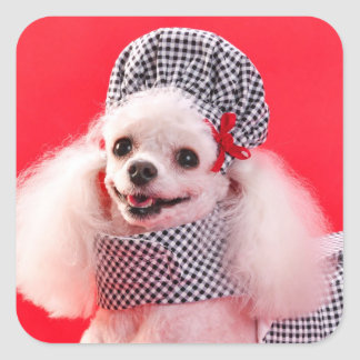 Toy Poodle in Hat Dress Square Stickers