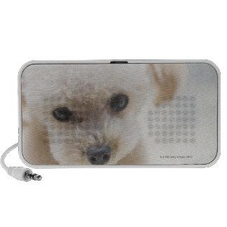 toy poodle portable speaker