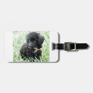 Toy Poodle Puppy Bag Tag