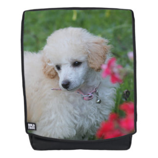 Toy poodle puppy boldface backpack