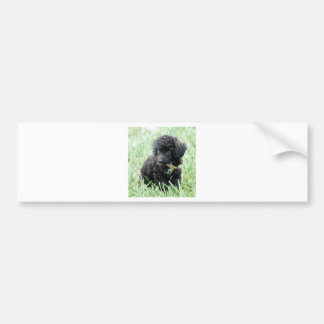 Toy Poodle Puppy Bumper Sticker