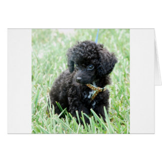 Toy Poodle Puppy Card