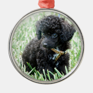Toy Poodle Puppy Round Metal Christmas Ornament