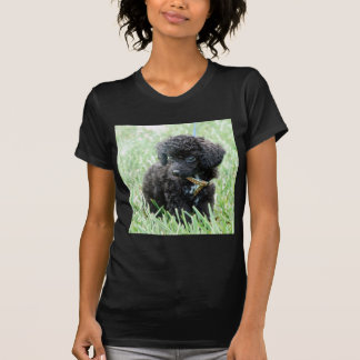 Toy Poodle Puppy T-shirt