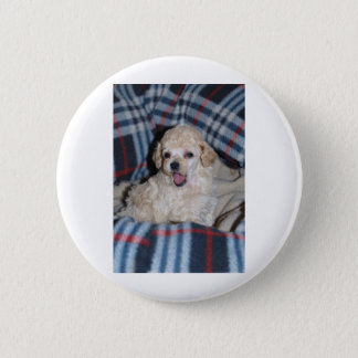 Toy Poodle Puppy Talking Button