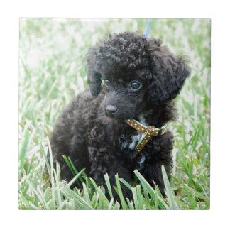 Toy Poodle Puppy Tile