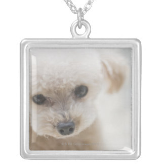 toy poodle silver plated necklace
