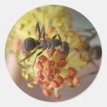 Trabajo como abeja pegatina redonda