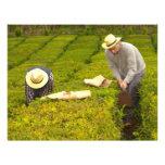 Trabajo en los jardines de té