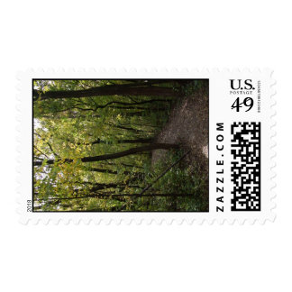 Track, Pathway, Trail, Forest, Trees, Attractive, Stamps