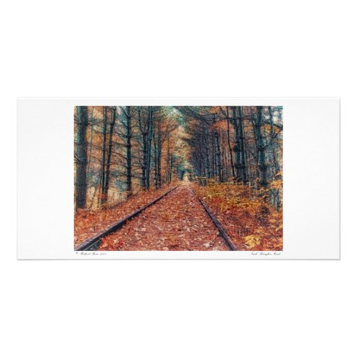 Track Through a Forest Photo Card