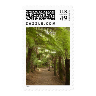 Track to St Columba Falls through Fern Glade St Postage Stamps