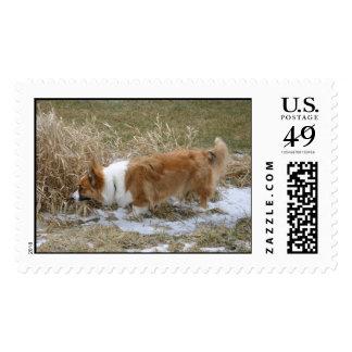 Tracking Cardigan Welsh Corgi Postage