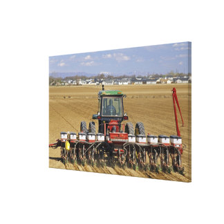 Tractor pulling a seed corn planter. canvas print