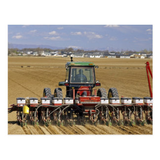 Tractor pulling a seed corn planter. postcard