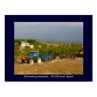 Tractor que cosecha las almendras España rural Postal