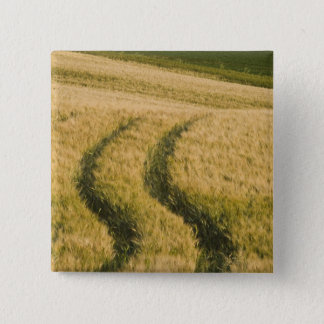 Tractors tracks through wheat, Tuscany, Italy Button