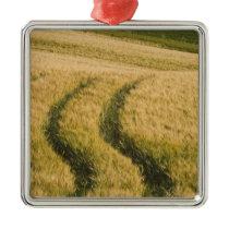 Tractors tracks through wheat, Tuscany, Italy Metal Ornament