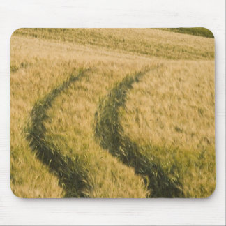 Tractors tracks through wheat, Tuscany, Italy Mouse Pad