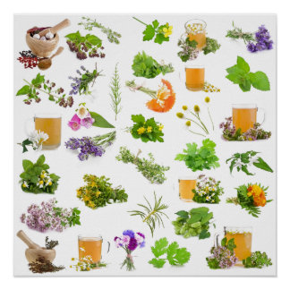 Traditional herbal medicine plant list for healing poster