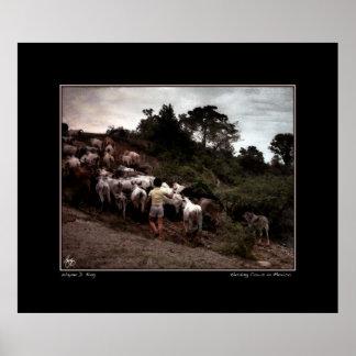 Traer a casa el ganado póster