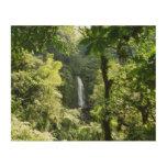 Trafalgar Falls Tropical Rainforest Nature Wood Wall Art