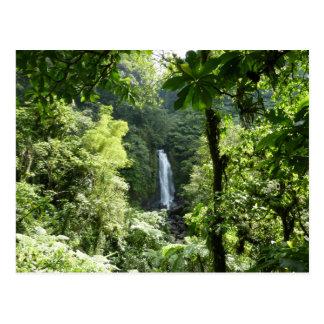 Trafalgar Falls Tropical Rainforest Photography Postcard
