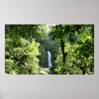 Trafalgar Falls Tropical Rainforest Photography Poster