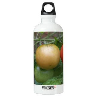 Traffic Light Tomatoes Aluminum Water Bottle