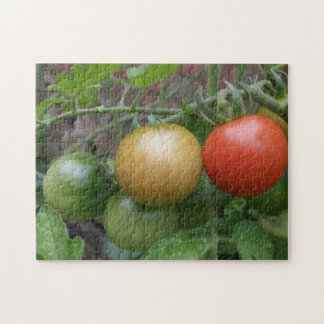 Traffic Light Tomatoes Puzzle