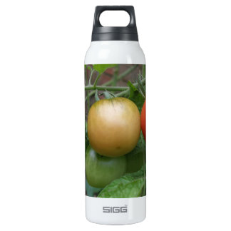 Traffic Light Tomatoes Thermos Water Bottle