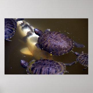 Tráfico serio en parque de la tortuga posters
