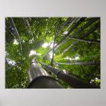 Tragaluz de bambú posters