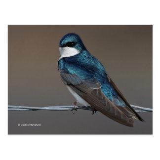 Trago de árbol: Pájaro azul hermoso en un alambre Tarjeta Postal