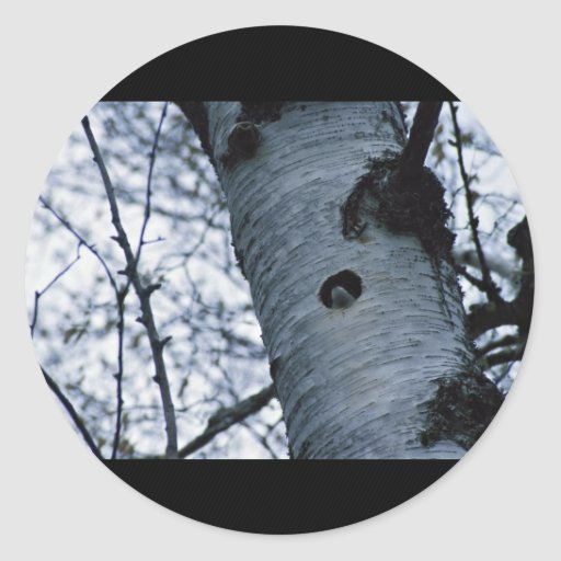 Trago de árbol pegatinas