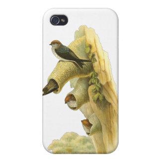 trago Rayar-throated iPhone 4/4S Carcasa