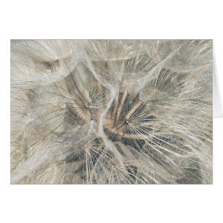 Tragopogon pratensis card