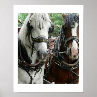 Traído por caballo póster